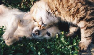 What Veterinary Experts Are Saying About DCM in Dogs and Cats