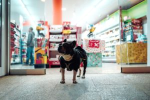 5 Traits of the Best Quality Dog Food on the Market