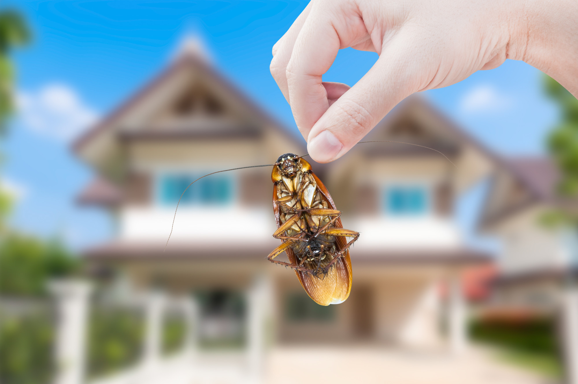 Do you suspect you've got pests but don't know if you need to call a pest control service or not? Here are five signs that you do.