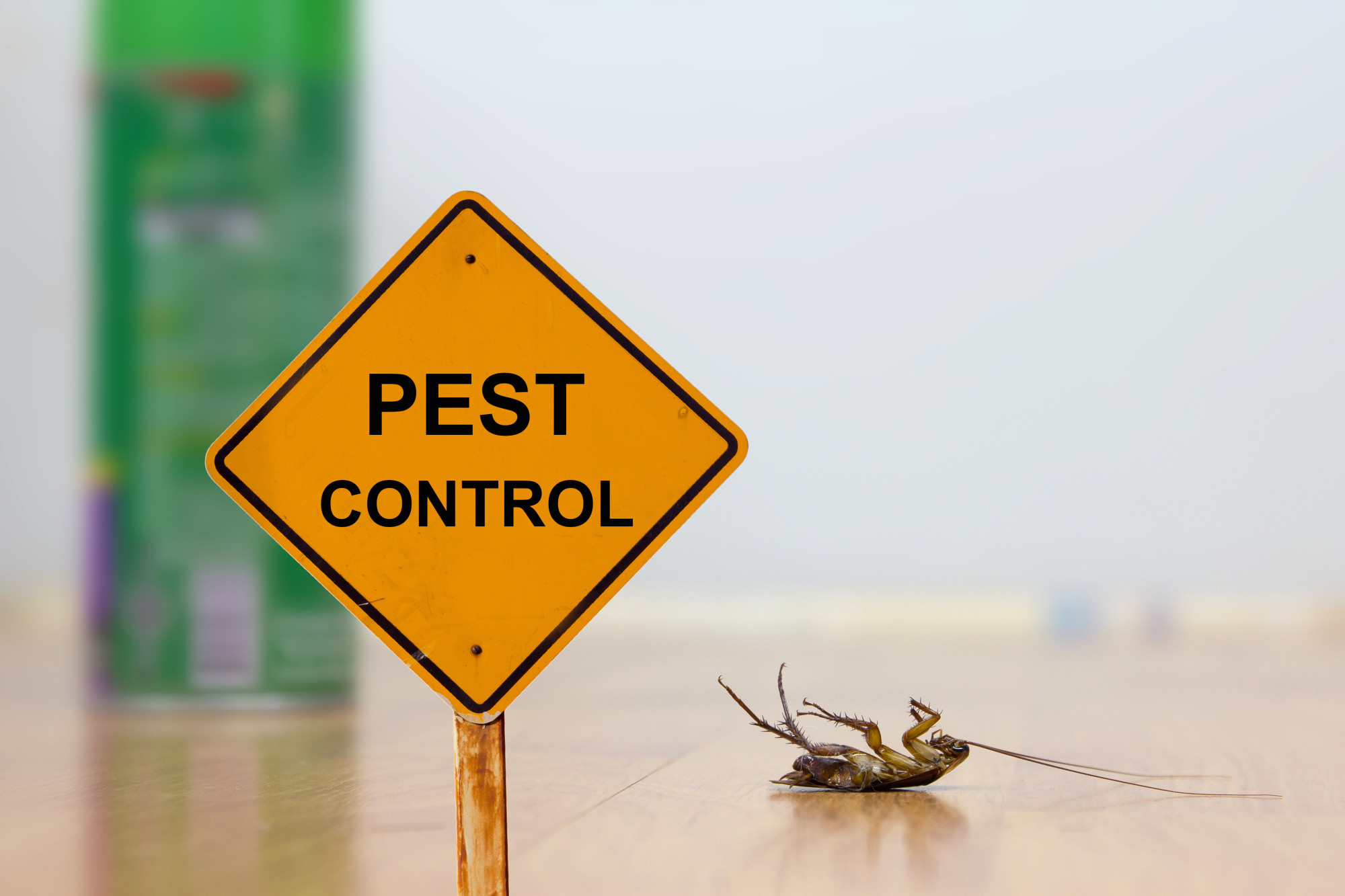 In order to have a pest-free home, there are a couple things you need to keep an eye on. This guide will explain the common household pests.